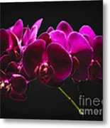 Light Painted Orchids Metal Print