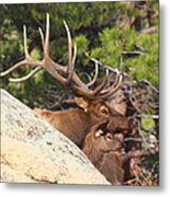 Like Father - Like Son Metal Print by Shane Bechler