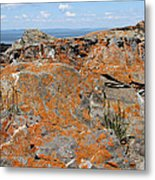 Likin' The Lichen Metal Print