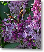 Lilac Butterfly Metal Print