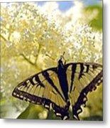 Swallowtail Lilac Spring Photo Metal Print