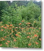 Lillies In The Valley Metal Print