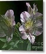 Lily - Liliaceae 3 Metal Print