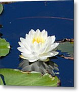 Lily Dreams Metal Print