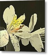 Lily Light Metal Print