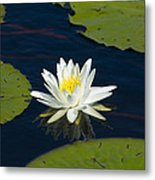 Lily Pad And Flower Metal Print