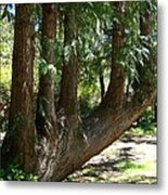 Limbs To Trees Metal Print