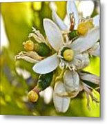 Lime Blooms And Fruit Metal Print