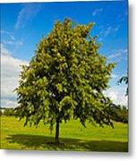 Lime Tree In Summer Metal Print