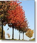 Line Of Autumn Trees Metal Print