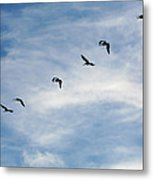 Linear Flock Of Pelicans Metal Print