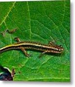 Lined Salamander 3 Metal Print