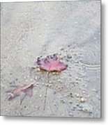 Lingering On Shore Metal Print