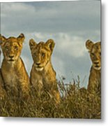 Lion Cubs Serengeti National Park Metal Print