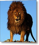 Lion In The Sky Metal Print