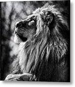 Lion Meditating Metal Print