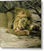 Lion Reclining In A Landscape Metal Print