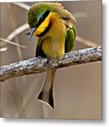 Little Bee Eater Metal Print