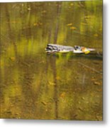 Little Carp River Bed 1 Metal Print