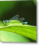 Little Dragonfly Metal Print