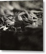 Little Feather Lost Metal Print