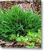 Little Grass Mound Metal Print
