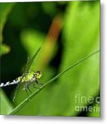 little Green wings Metal Print