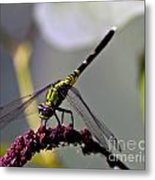 Little Green Wings Three Metal Print