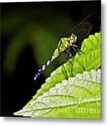Little Green Wings Two Metal Print
