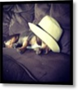 Little Guy Was So Tired He Fell Asleep Metal Print