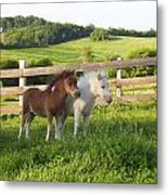 Little Horses At Pasture Metal Print