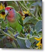 Little Lovebird Metal Print
