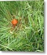 Little Orange Mushroom Metal Print