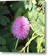 Little Purple Bloom Metal Print