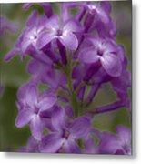 Little Purple Flowers Metal Print