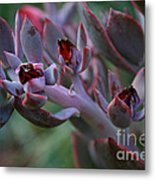 Little Red Blossoms Metal Print
