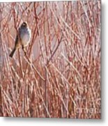 Little Sparrow Metal Print