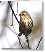 Little Speckled Bird Metal Print