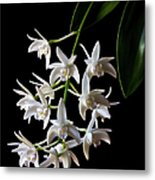 Little White Orchids Metal Print