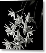 Little White Orchids In Black And White Metal Print