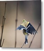Little Wings Metal Print