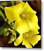 Little Yellow Flower Metal Print