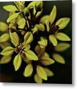 Little Yellow Flowers Metal Print