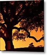 Live Oak- Cemetery- Natchez Mississippi Metal Print