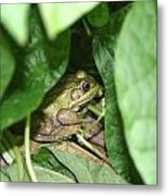 Lives With The Green Beans Metal Print
