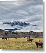 Livingstone Range And Pastureland Metal Print by Darwin Wiggett