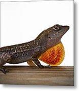 Lizard Portrait Metal Print