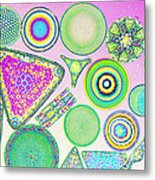 Lm Of Fossilized Diatoms Metal Print