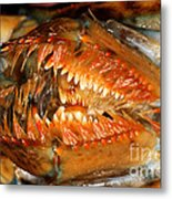 Lobster Mouth Metal Print