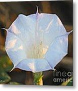 Loco Weed Flower Metal Print
